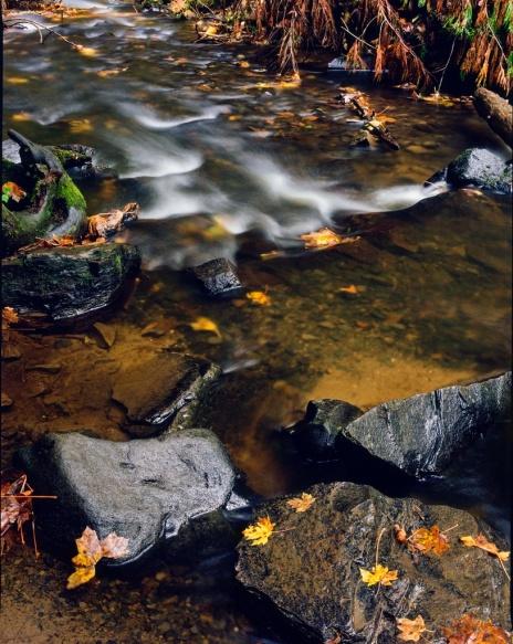 Fall Leaves/Stream