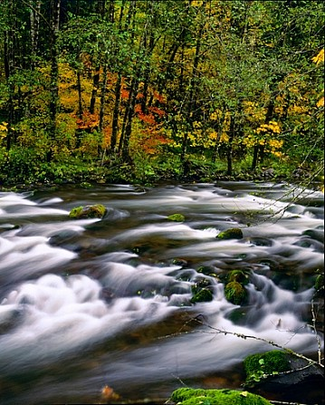 Fall Scene Central Oregon