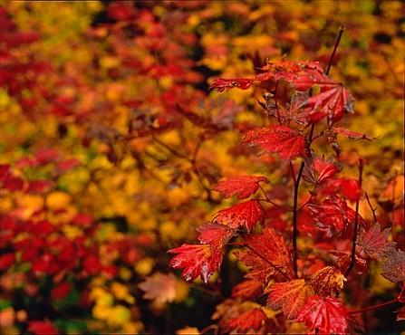 Oregon Fall Color